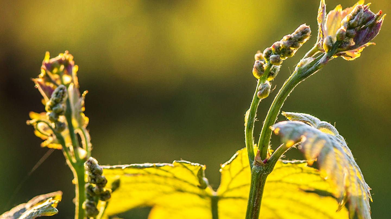 生物とボルドーのぶどう畑 持続可能なワインづくりへの挑戦