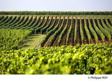 ボルドーワインの生産地のイメージ画像